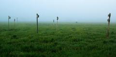 Marsh mist - Hampton, NH